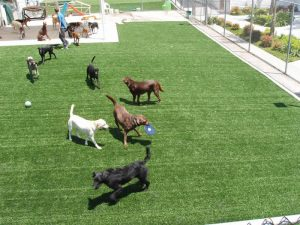 Artificial Grass Installation for pets