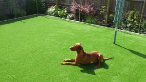 Artificial Grass Installation With Pets